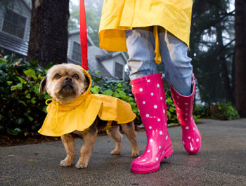 Dog wearing raincoat out for a walk