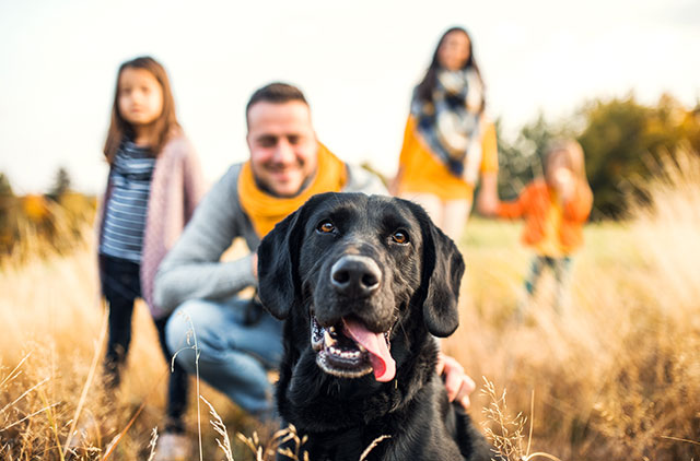 young family with two small children and a dog on a meadow